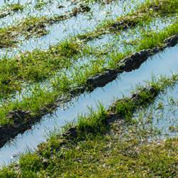 Tips-on-How-to-Repair-Prevent-Flooded-Lawns-4