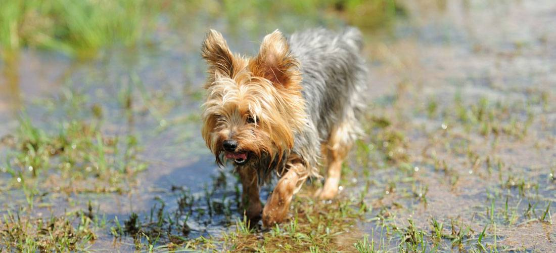 Tips-on-How-to-Repair-Prevent-Flooded-Lawns