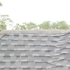 shingle roof