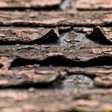 tattered-asphalt-shingles
